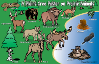 A Plains Cree Poster on Prairie Animals