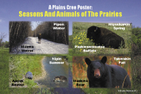 Seasons & Animals of the Prairie Poster